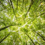 El paper: un material renovable i ecològic si l'usem com cal